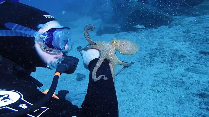 Niedlicher Oktopus hängt sich an Arm eines Tauchers