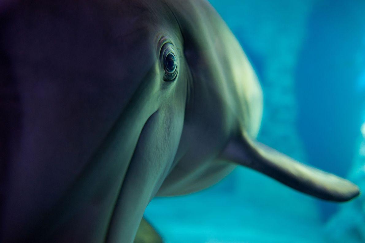 Foto eines Delfins im Georgia Aquarium