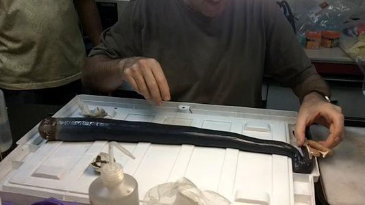 Riesen-Wurmmuschel (Bizarre Tiefseemuschel ist so lang wie ein Arm)