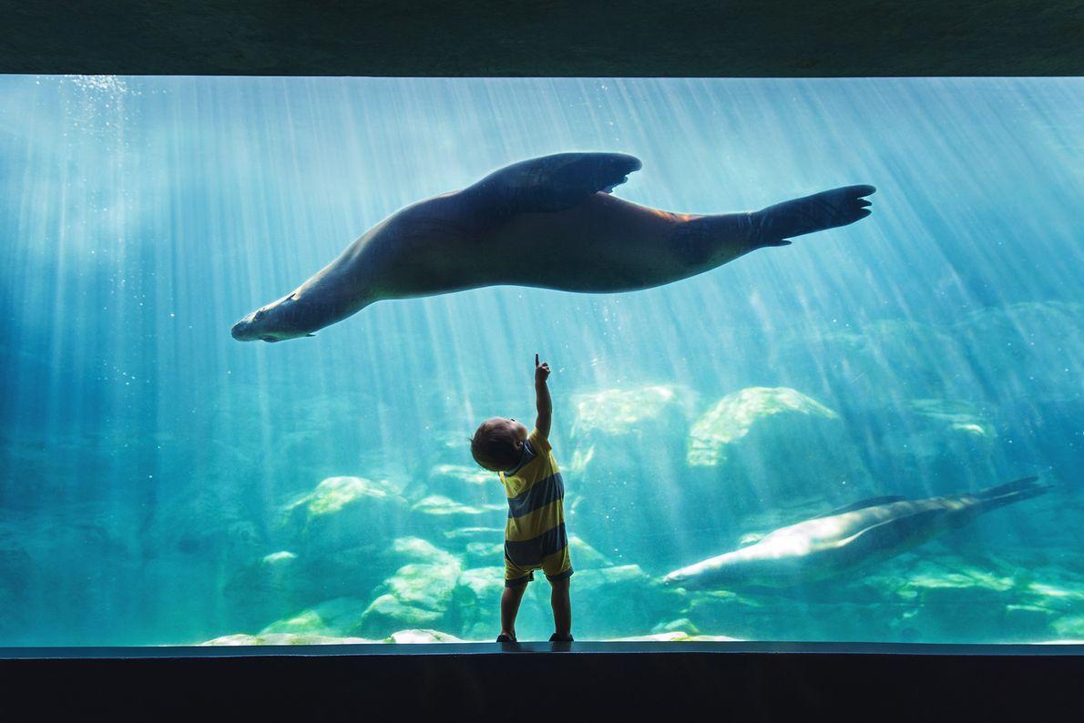 Ein kleiner Junge beobachtet einen Seelöwen