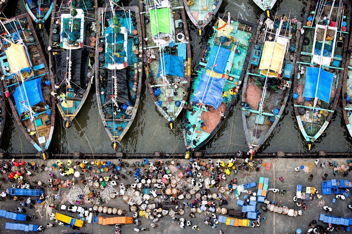 Fischauktion in Mumbai, Indien