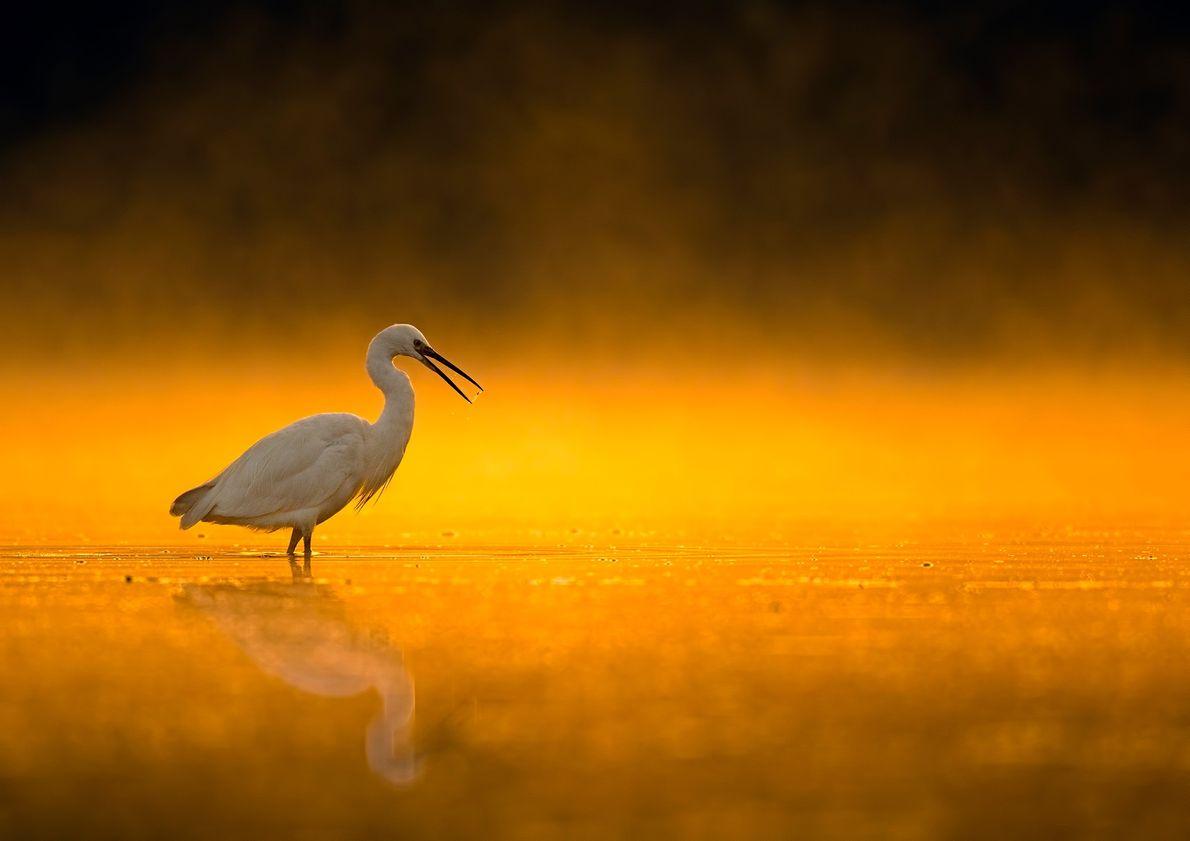 Ein Reiher steht bei Sonnenaufgang im Wasser
