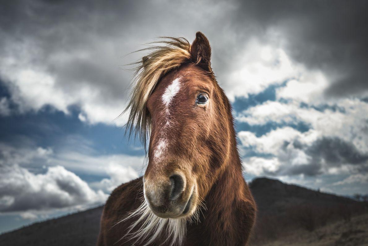 Wildes Pony in Virginia