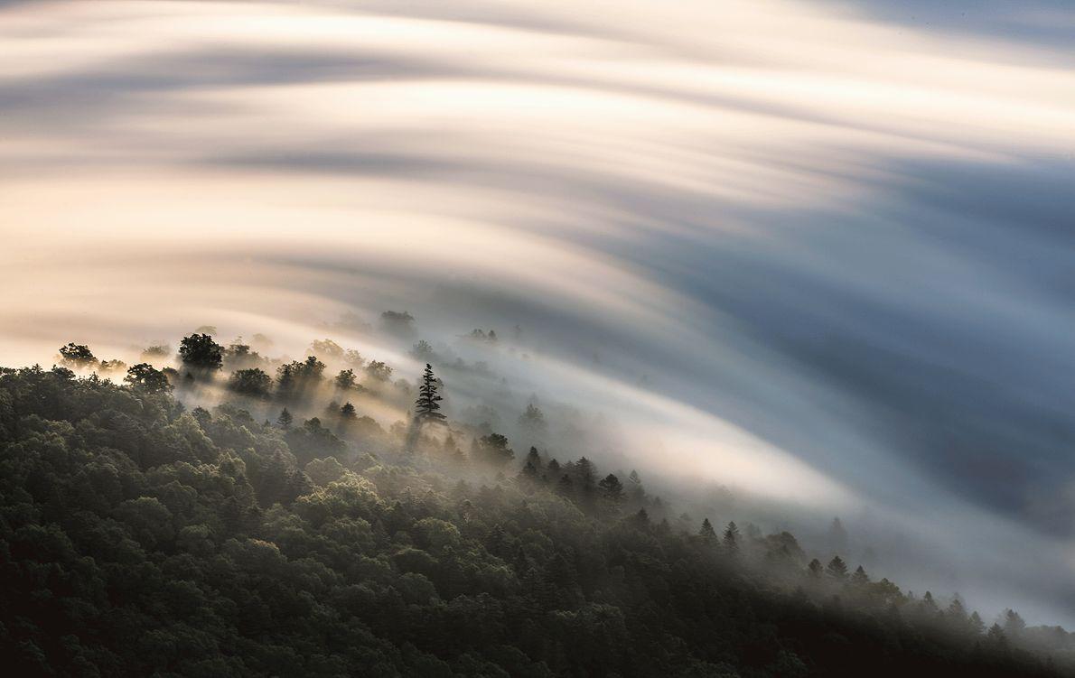 Wolken ziehen über einen Wald in Japan