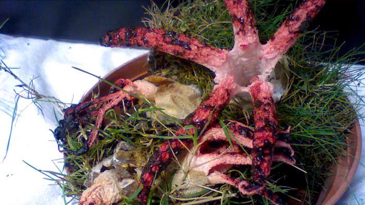 Dieser Pilz scheint mit Tentakeln um sich zu greifen