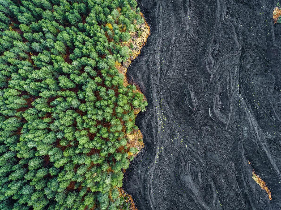 Erkaltete Lava am Rand eines Waldes auf Sizilien