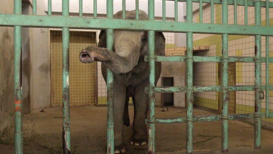 Elefanten vereinsamen in japanischen Zoos
