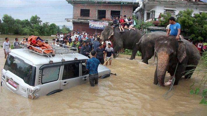 Elefanten retten Hunderte Menschen aus Flutgebiet