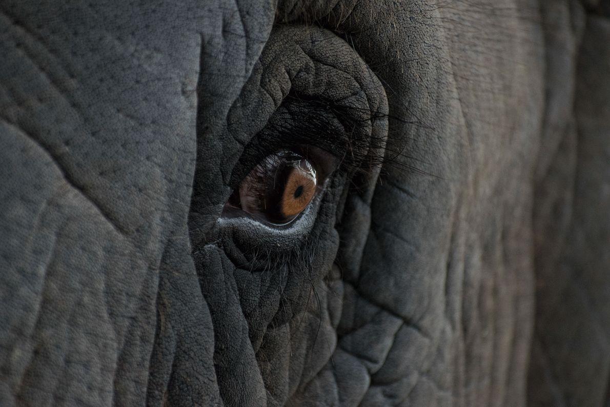 Ein Auge eines Elefanten