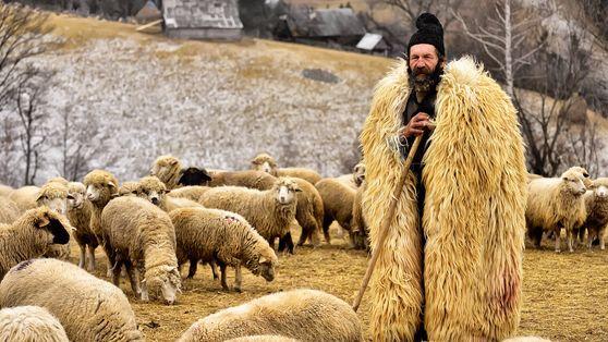 Ein Schäfer in einem Pelzmantel mit seiner Herde in Transsylvanien