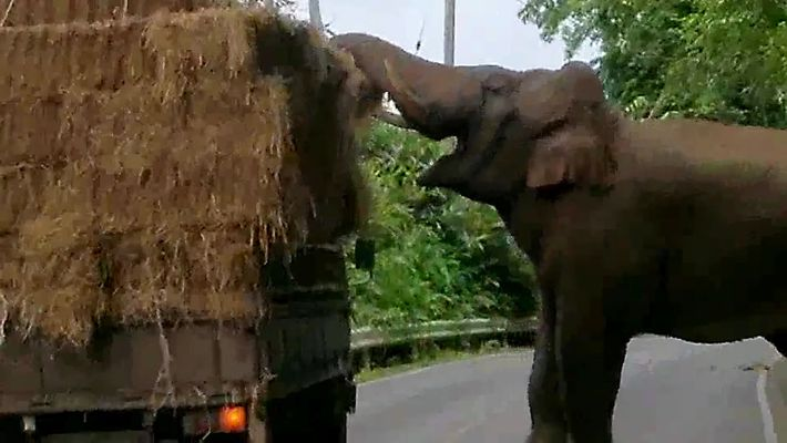 Elefanten-Überfallkommando