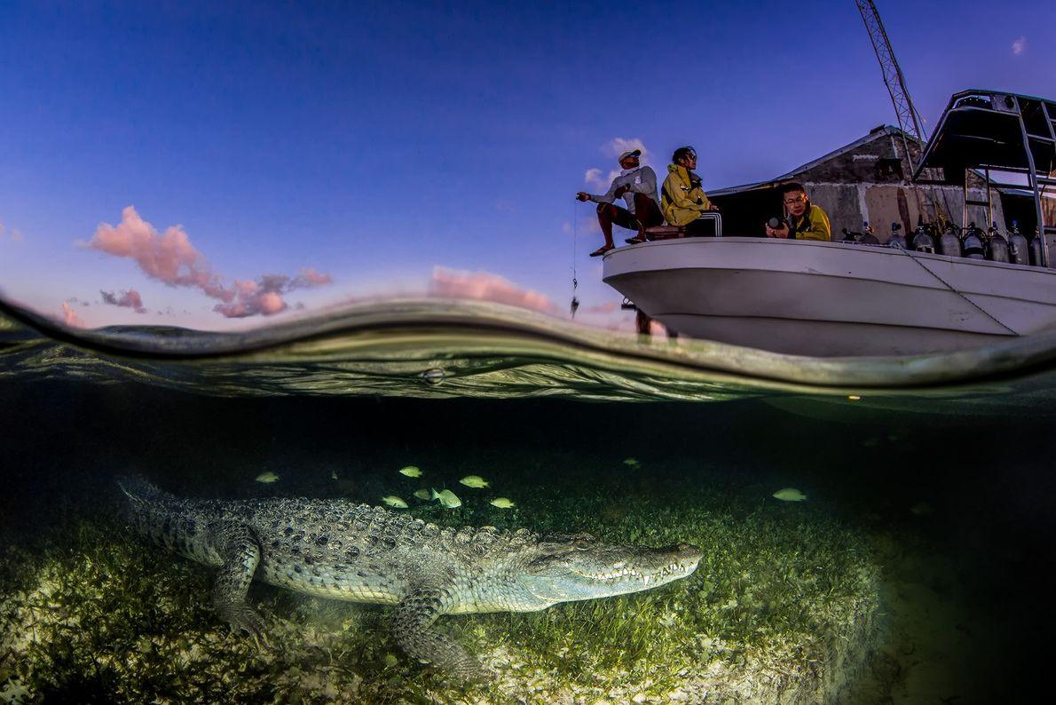 In Spitzkrokodil im Wasser unter einem Boot