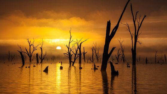 Tote Bäume in einem See bei Sonnenaufgang
