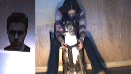 Hunde reagieren mit Körpersprache auf wütende Menschen