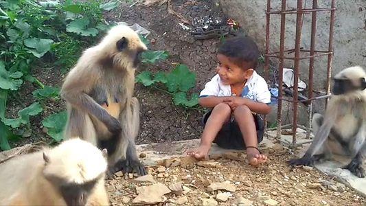 Können sich Affen mit Menschen anfreunden? Experten geben Auskunft.