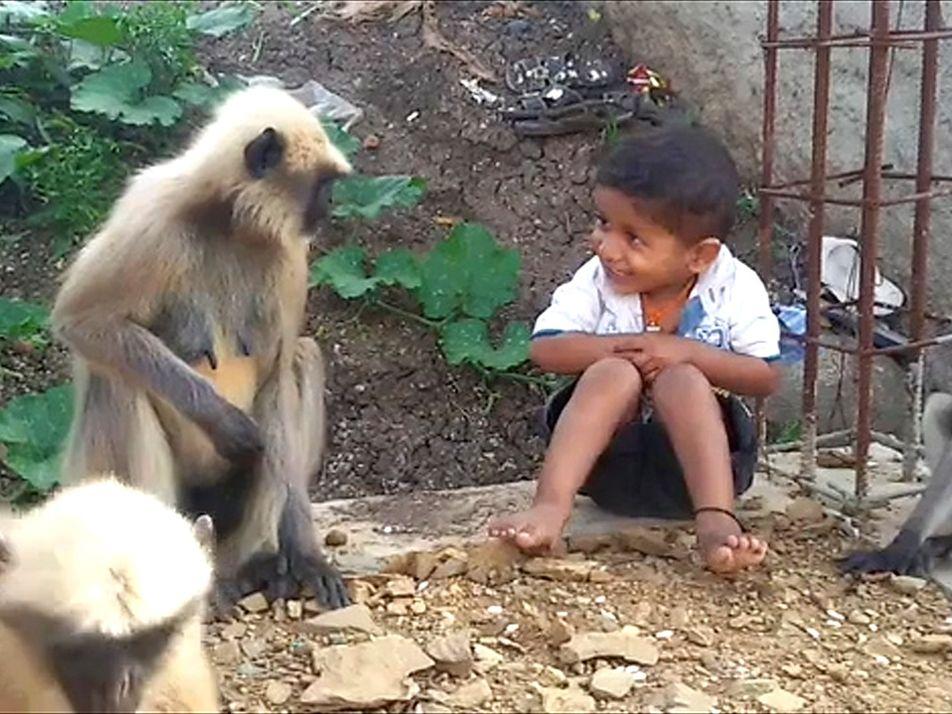 Wilde Affen freunden sich mit kleinem Jungen an