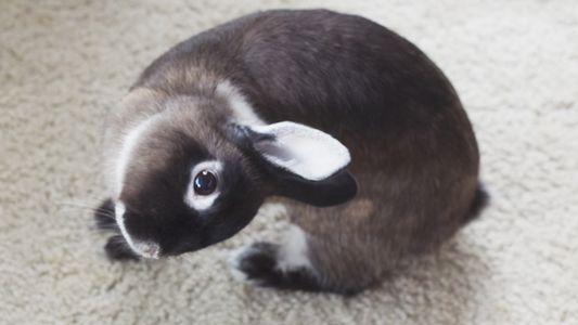 Auch Kaninchen mit schiefem Kopf können ein glückliches Leben führen