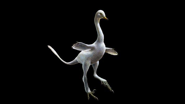 Dino-Fossil: Raptor sah aus wie eine Ente