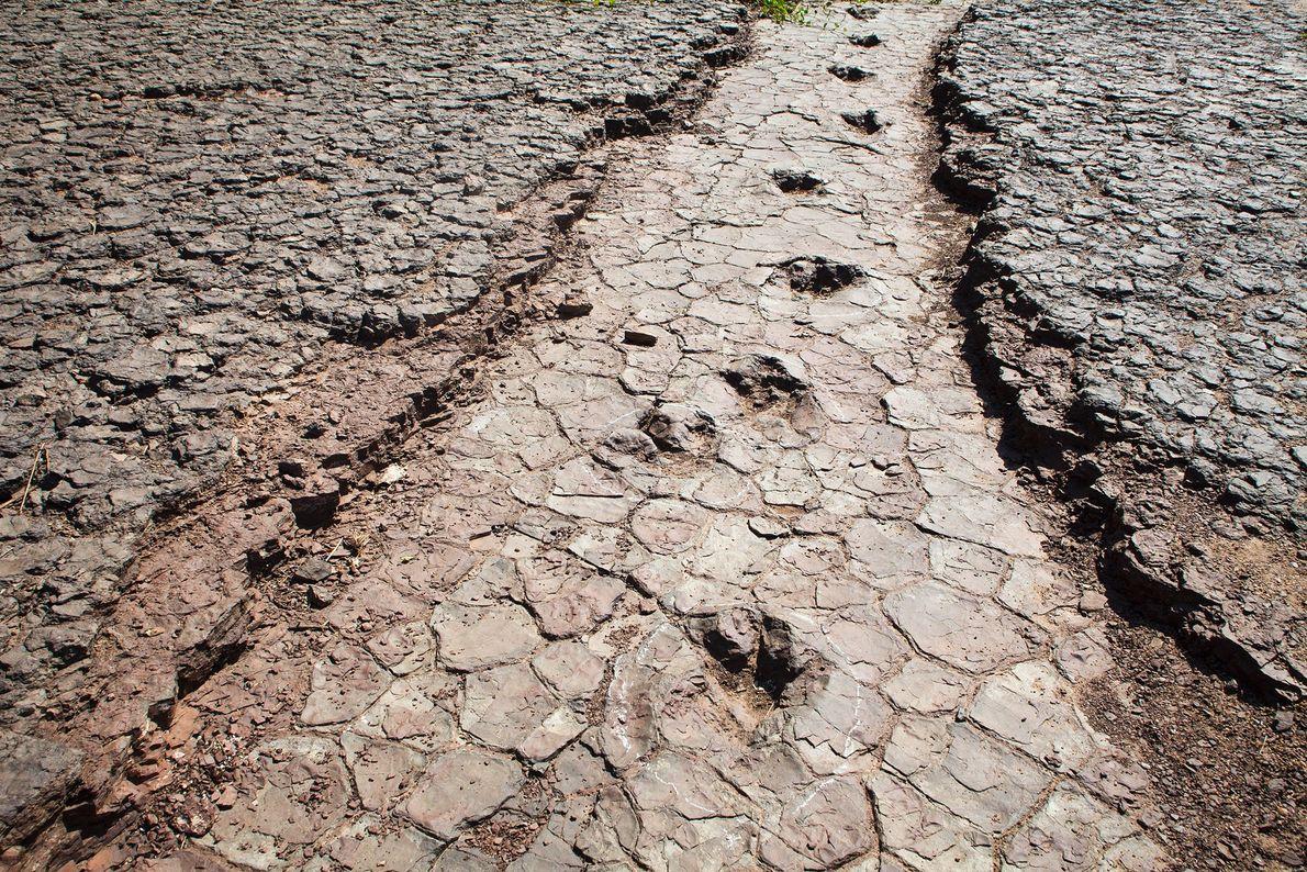 Eine Dinosaurierspur führt durch das Tal der Dinosaurier in Sousa im Nordosten Brasiliens. Versteinerte Knochen verraten ...