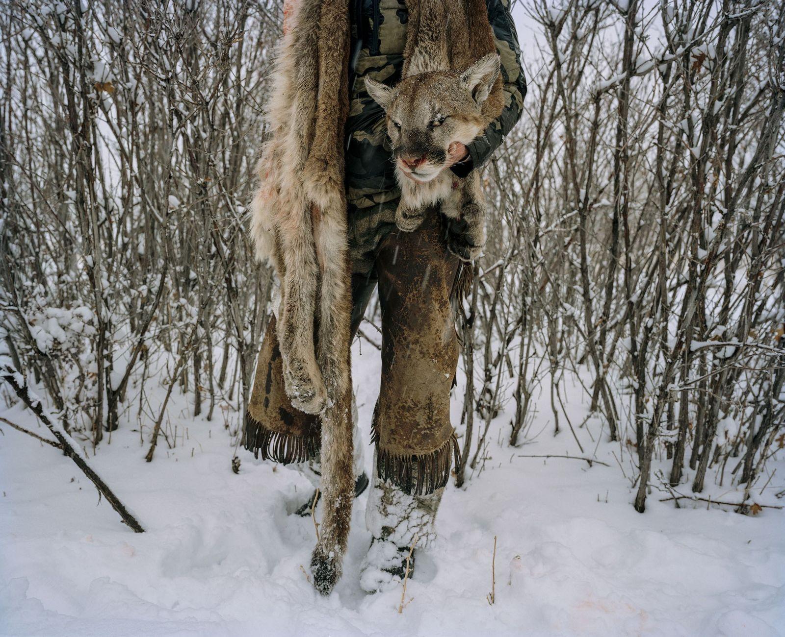 Ein Jäger trägt das Fell eines Pumas, den er in diesem Jahr im Süden von Utah ...