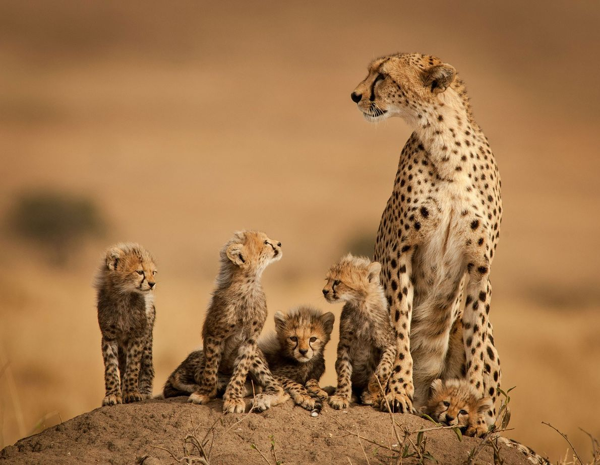 Mutter mit ihren Jungtieren