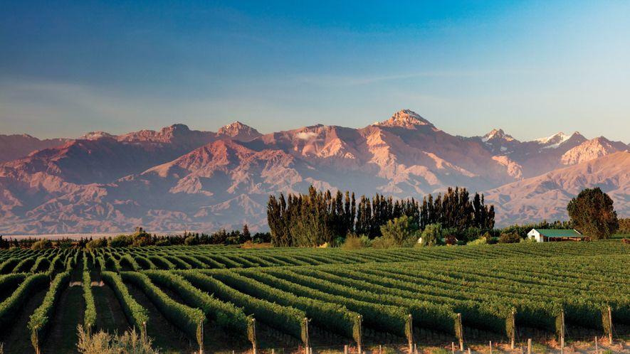 Die Anden bilden den Hintergrund für die Weinreben der Region Valle de Uco in Mendoza, die ...
