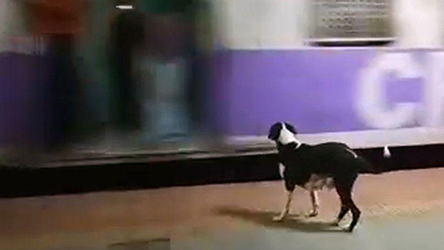 Hund wartet jeden Abend auf den gleichen Zug