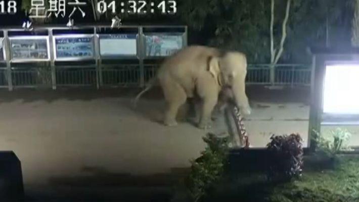 Asiatischer Elefant schleicht sich über Grenze zwischen Laos und China