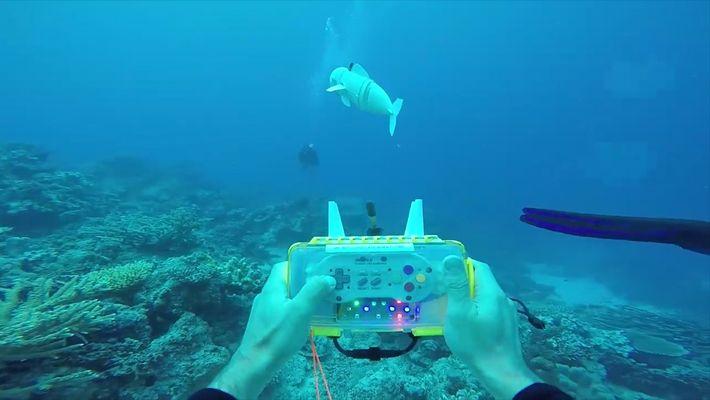 Robo-Fisch hilft bei der Meeresforschung