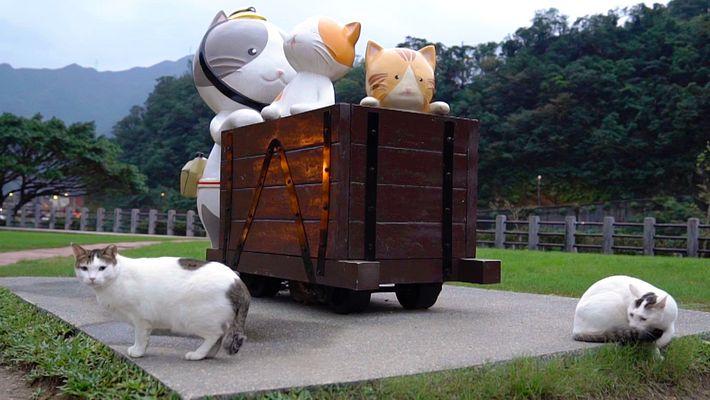 Ehemaliger Bergbauort ist jetzt ein Katzendorf