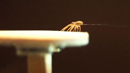 Spinnen fliegen mit eigenen Ballons