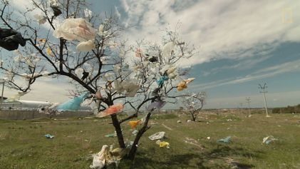 Wissen kompakt: Plastik