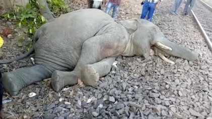 Indiens Versuch, Zugunfälle mit Elefanten einzudämmen