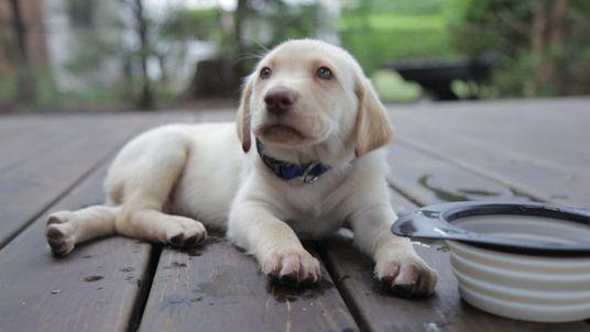 19 Gesten, über die Hunde mit uns sprechen