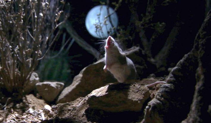 Die Maus, die Fleisch frisst und den Mond anheult