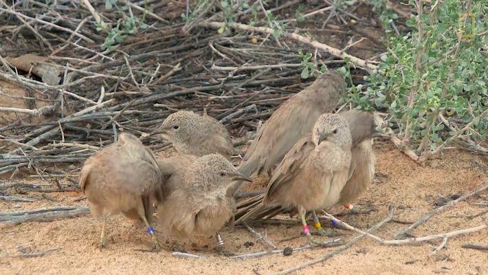 Diese Vögel treffen sich zu heimlichen Schäferstündchen