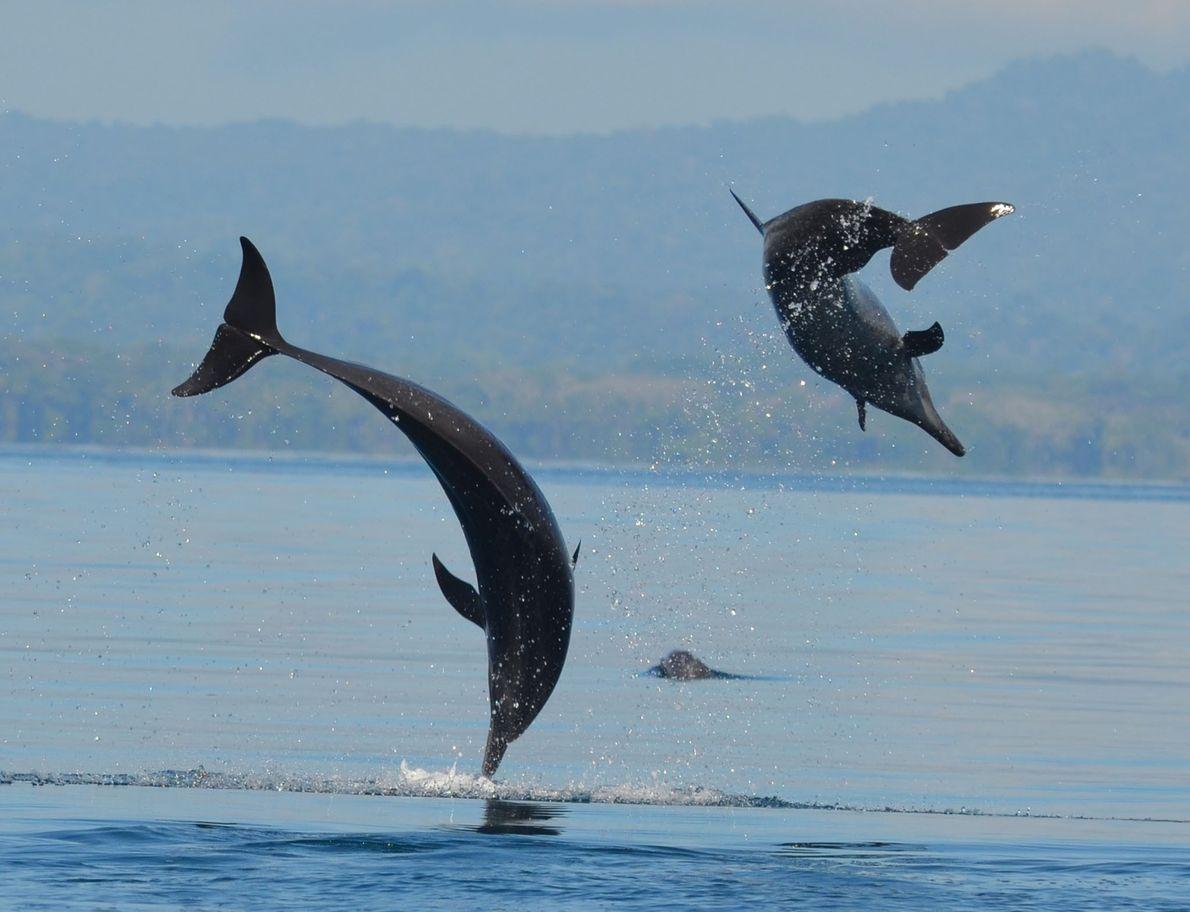 Schlankdelfine