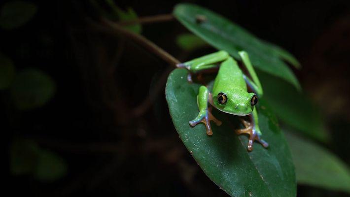 Amphibien-Apokalypse: Chytridpilz breitet sich global aus