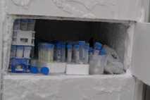 Proben im Tiefkühlschrank eines Labors.
