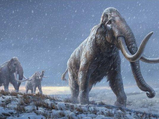 Älteste DNA der Welt aus einem Mammutzahn sequenziert