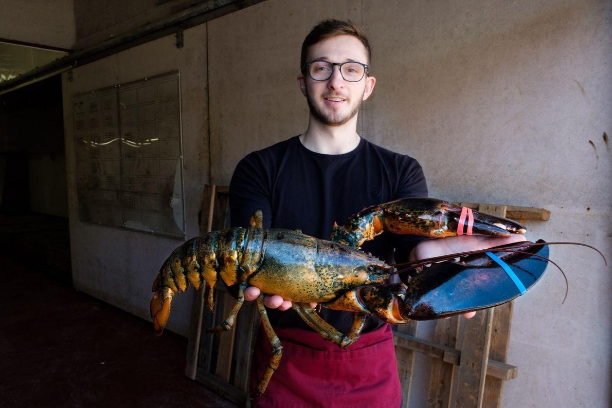 Reid Camero, der im Hall's Harbour Lobster Pound arbeitet, hält einen fünf Pfund schweren Hummer hoch. ...
