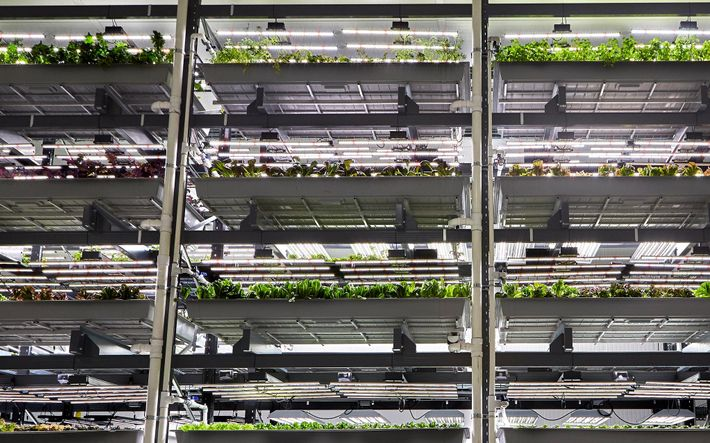 Vertikal gestapelte Pflanzen