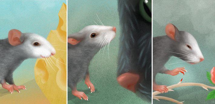 Mimik der Mäuse Gesichtsausdrücke
