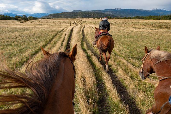 Ein Gaucho führt die Besucher auf einen Ausritt über das hügelige Grasland, auch Pampa genannt, in ...