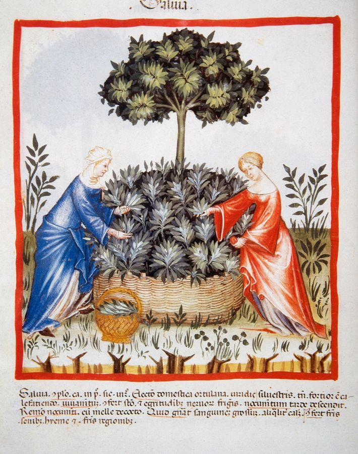 Abbildung aus dem 14. Jahrhundert - Tacuinum Sanitatis