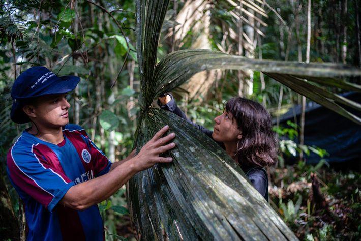 Obed Quiroz (links) und Lina Bolivar (rechts) sind Teil des Botanikerteams. Ihnen zufolge ähneln diese Blätter ...