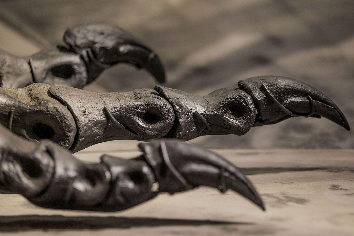 Eine Nahaufnahme zeigt die Füße und Klauen des fast vollständig erhaltenen Tyrannosaurus-Exemplars Tristan Otto, das im ...