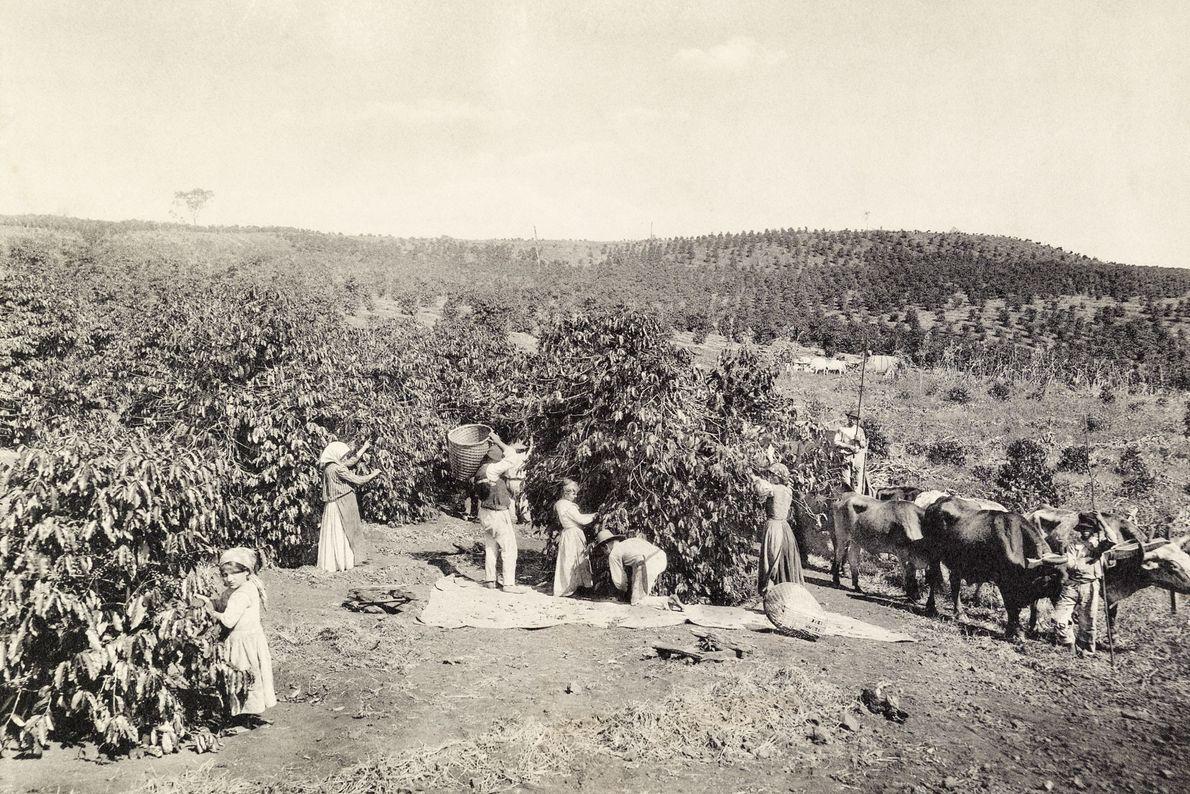 Arbeiterinnen auf einer großen Plantage