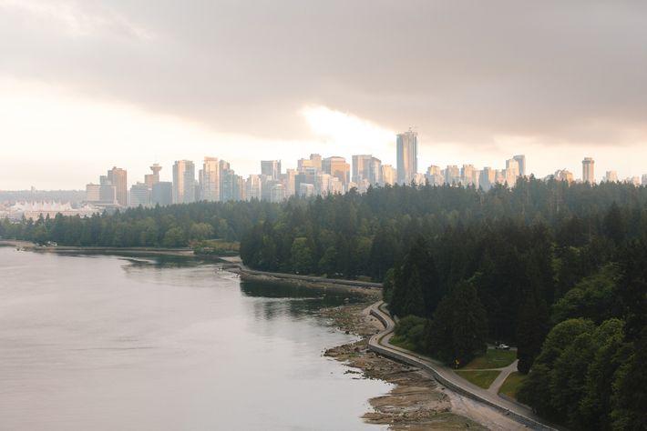 Vancouvers majestätische Douglasien bilden einen kraftvollen Kontrast zu den glänzenden Wolkenkratzern der Stadt.