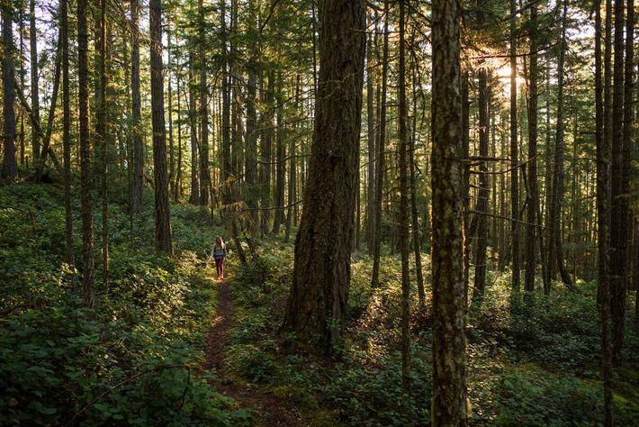 Die Sunshine Coast mit ihren Bächen, Wasserfällen und dem sattgrünen Blätterwerk ist ideal zum Waldbaden.